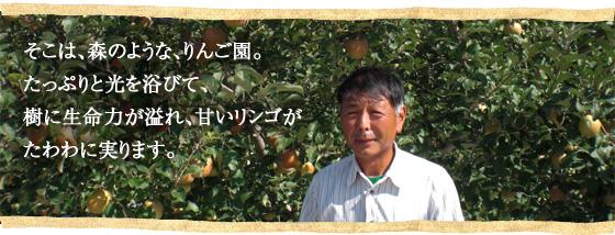 そこは、森のような、りんご園。たっぷりと光を浴びて、樹に生命力が溢れ、甘いリンゴがたわわに実ります。