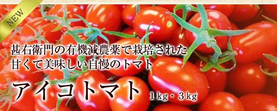 甚右衛門から有機減農薬で栽培、甘く美味しい「アイコトマト」