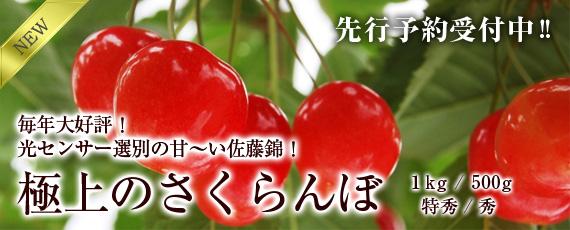 今しか味わえない宝石のような極上の『さくらんぼ・佐藤錦』贈答用にもぜひ!